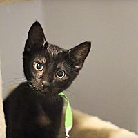 Adopt A Pet :: Jinx - Lincoln, NE