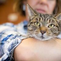 Adopt A Pet :: Pia - Alpine, TX