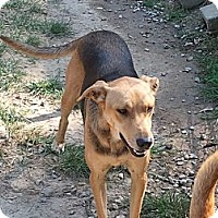 Adopt A Pet :: S507 Badger - Bay Springs, MS