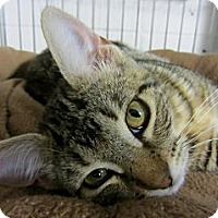 Adopt A Pet :: Lina - Mobile, AL