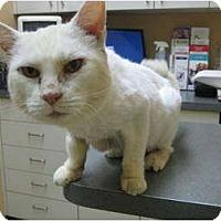 Adopt A Pet :: Bella (cevh) - Little Falls, NJ