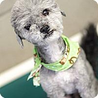 Adopt A Pet :: Blueberry - NON SHED - Phoenix, AZ