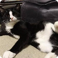 Adopt A Pet :: Barn Cats - Jackson and Smudge - Colmar, PA