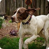 Adopt A Pet :: Rebel- Minnesota - Wood Dale, IL