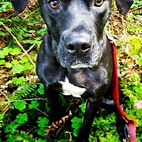 Adopt A Pet :: Diesel - Tillamook, OR