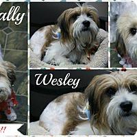Adopt A Pet :: Wally & Wesley - Rockwall, TX