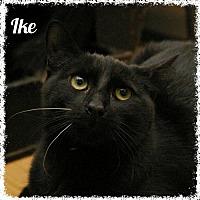Adopt A Pet :: Ike - Island Heights, NJ