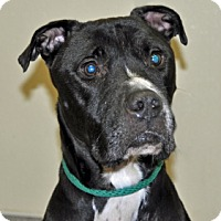 Adopt A Pet :: Yukon - Port Washington, NY