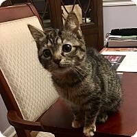 Adopt A Pet :: Fiona - Jackson, NJ