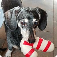 Adopt A Pet :: Maggie-PENDING!!!! - West Bloomfield, MI