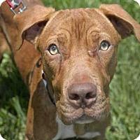 Adopt A Pet :: ZEN - West Palm Beach, FL