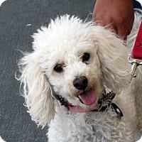 Adopt A Pet :: Penelope - Palmdale, CA