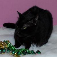 Adopt A Pet :: Big Boy Binky - Metairie, LA