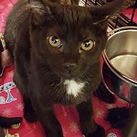Adopt A Pet :: Ace - Irwin, PA