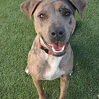 Adopt A Pet :: Todd - Meridian, ID