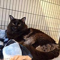 Adopt A Pet :: Mitzi - St. Charles, MO