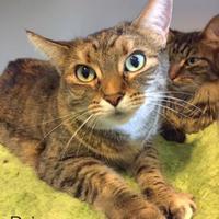 Adopt A Pet :: Princess - Annapolis, MD