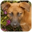 Photo 1 - German Shepherd Dog Mix Puppy for adoption in Los Angeles, California - Coral von Lawall