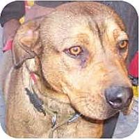 Adopt A Pet :: KITCHIE - Malibu, CA