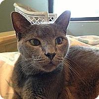 Adopt A Pet :: Fang - New Port Richey, FL
