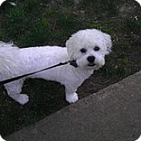 Adopt A Pet :: Baxter - Alexandria, VA
