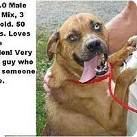 Adopt A Pet :: # 352-10 @ Animal Shelter - Zanesville, OH