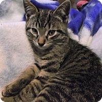 Adopt A Pet :: Sly - Douglas, ON