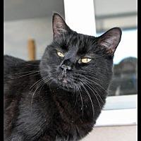 Adopt A Pet :: STARDUST - Alamogordo, NM