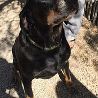 Hound (Unknown Type) Mix Dog for adoption in Seguin, Texas - Samuel