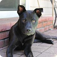 Adopt A Pet :: Natalie - Sagaponack, NY
