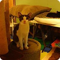 Adopt A Pet :: Dude - Bridgeton, MO