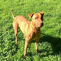 Adopt A Pet :: Peanut Butter - Glenwood, GA