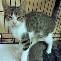Adopt A Pet :: Blueberry - Lunenburg, MA