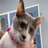 Adopt A Pet :: CAMMIE - Canfield, OH
