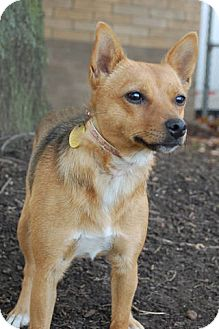 Chihuahua Mix Dog for adoption in Lexington, Kentucky - Diana