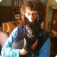 Adopt A Pet :: Petey - Mount Kisco, NY