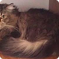 Adopt A Pet :: Moxy - Palatine, IL