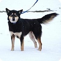 Adopt A Pet :: Isis - North Wales, PA