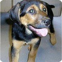 Adopt A Pet :: Nala - Alexandria, VA