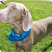 Adopt A Pet :: Duke  **ADOPTED** - Eustis, FL