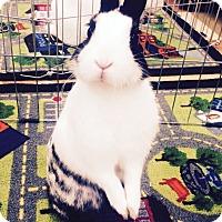 Adopt A Pet :: Panache - Paramount, CA