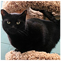 Adopt A Pet :: Donna - Forked River, NJ