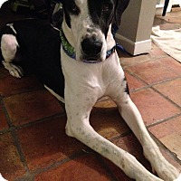 Adopt A Pet :: Tasha - Broomfield, CO