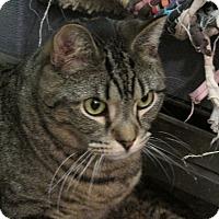 Adopt A Pet :: Bentley - Plattekill, NY