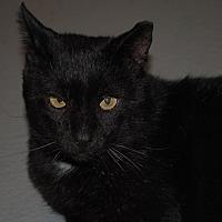 Adopt A Pet :: Quixote - Lafayette, NJ