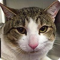 Adopt A Pet :: Beau - Springdale, AR