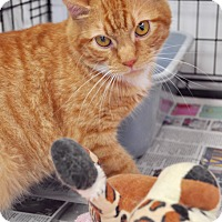 Domestic Shorthair Cat for adoption in Greenville, Delaware - Linus (FCID# 01/26/17-34 Trainer Clinic)