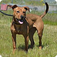 Adopt A Pet :: Ruby - Yreka, CA