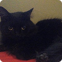 Adopt A Pet :: Lil' Bit - Columbus, OH