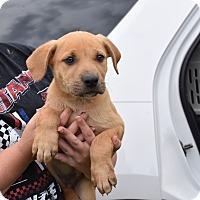 Adopt A Pet :: JONAH - South Dennis, MA